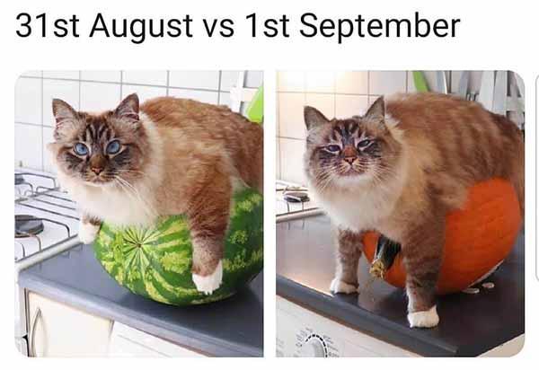 31st august vs 1st september - halloween meme