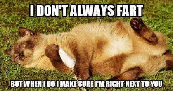 Cat-Fart-Meme i don't always fart