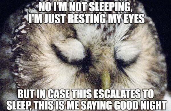 Funny-Goodnight-Memes