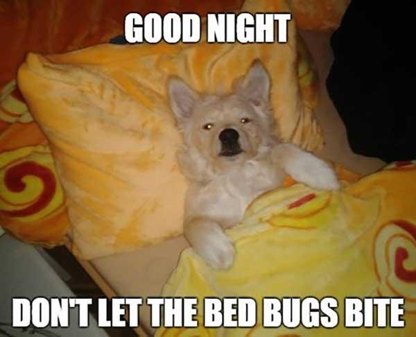 bed_dog_good_night_meme dont let the bugs bite