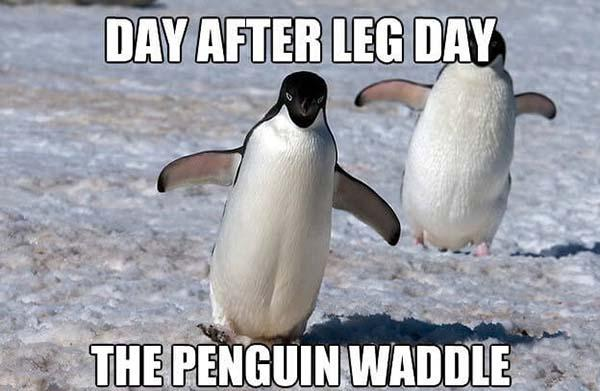 day after leg day the penguin waddle