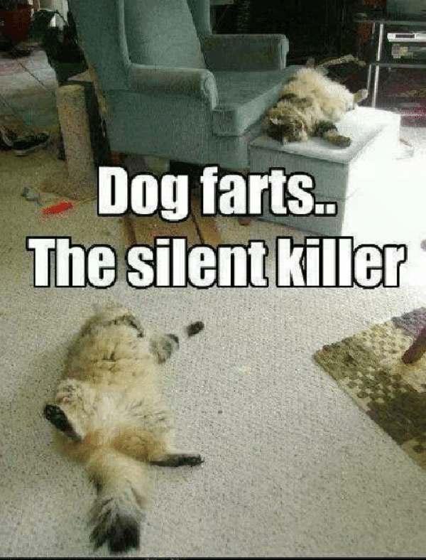 dog-farts-the-silent-killer