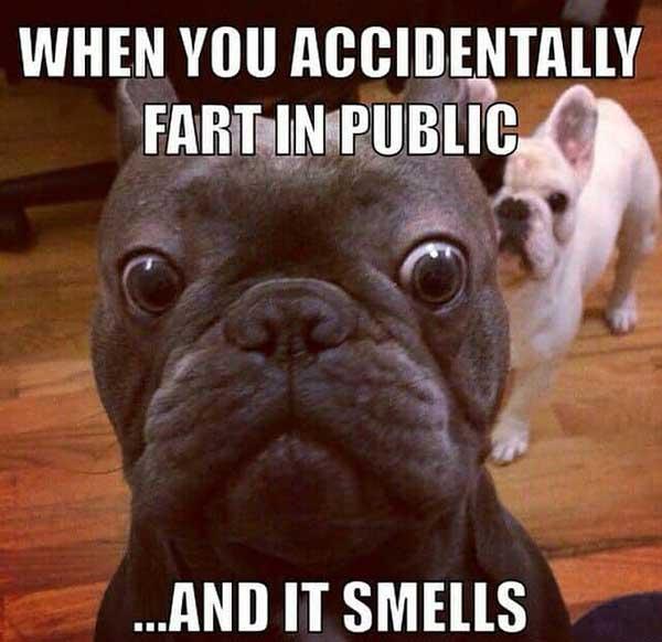 french bulldog fart meme