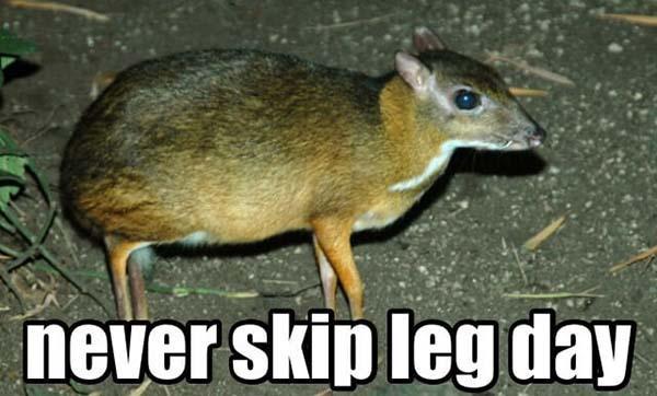 funny Never skip leg day