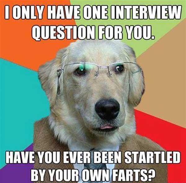 funny dog fart meme