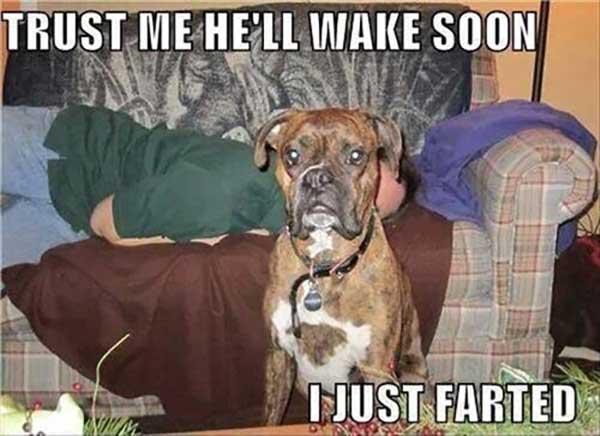 funny dog fart memes