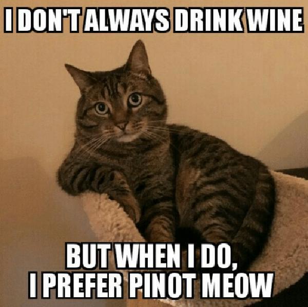 funny drinking wine meme