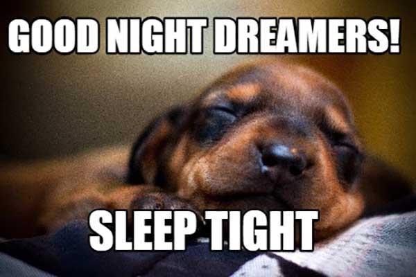 good night dreamers sleep tight - good night dog meme