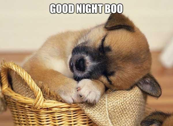 good night meme boo