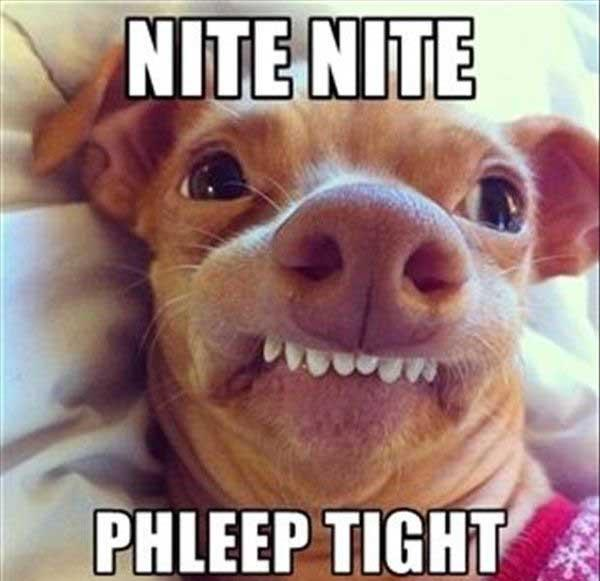 good night sleep tight meme