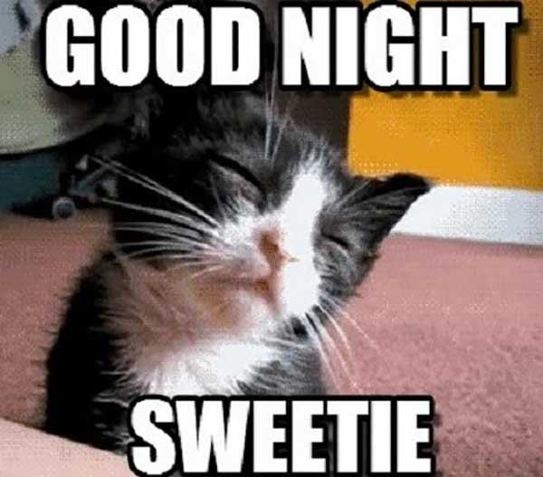 good night sweetie - good night cat meme