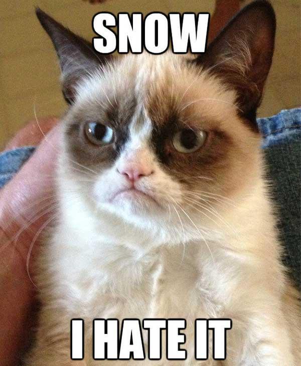 grumpy cat i hate snow meme