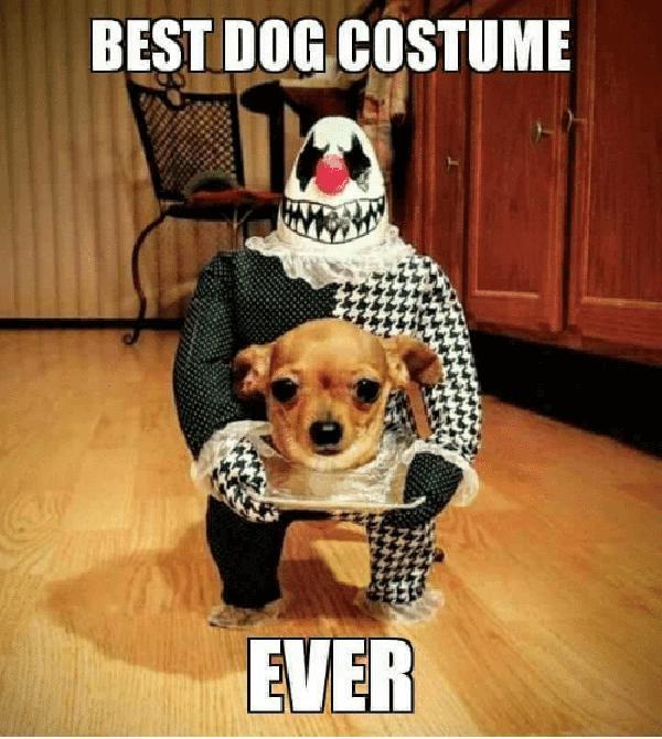 halloween dog meme