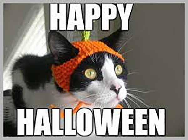 happy halloween meme cute cat