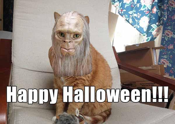 happy halloween meme funny cat