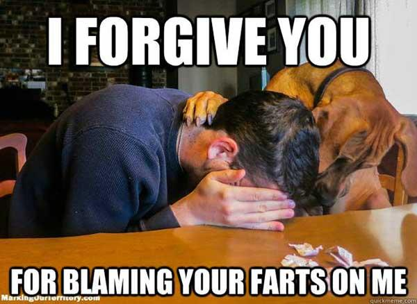 i forgive you... dog fart meme