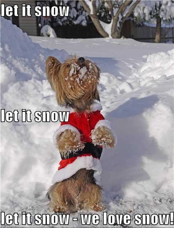let it snow, we love snow - let it snow meme