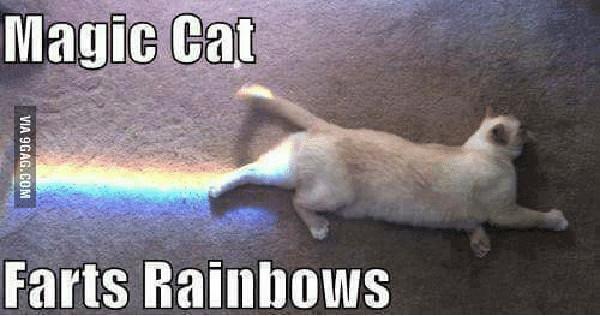 magic-cat-farts-rainbows