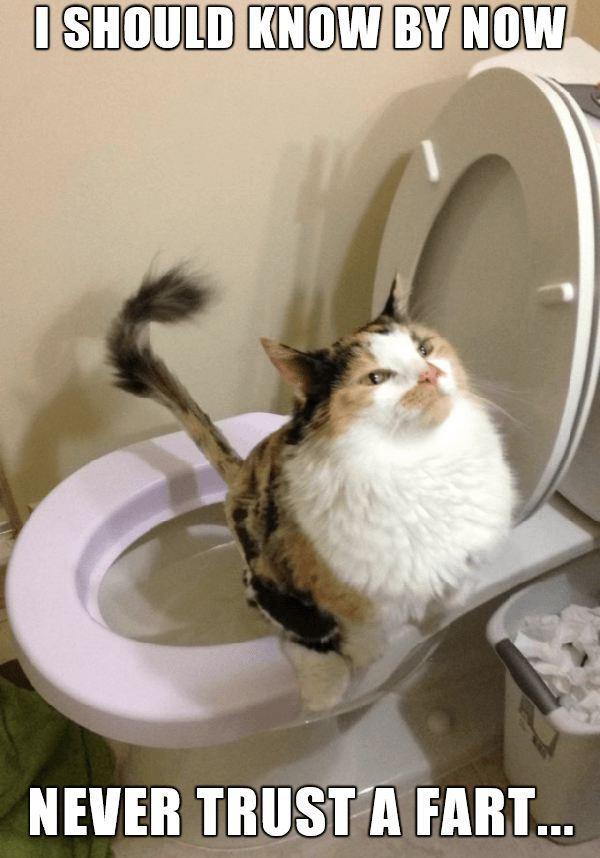 never trust a fart cat fart meme