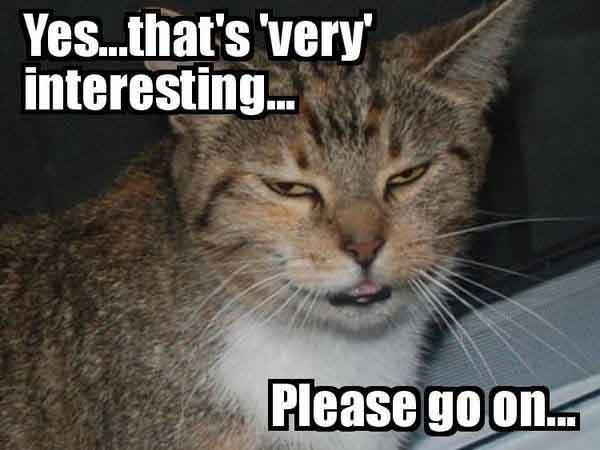 sarcastic cat meme