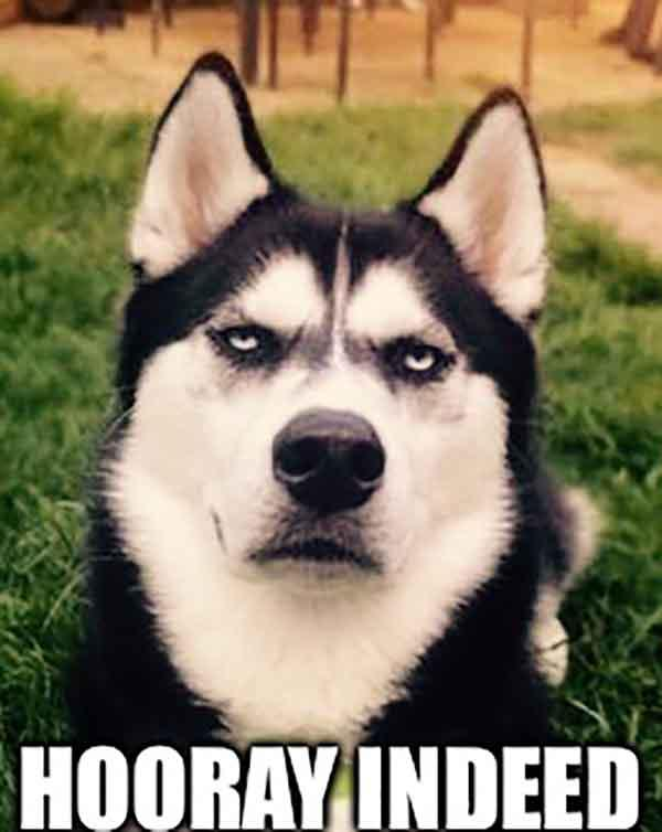 sarcastic dog meme