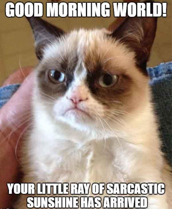 sarcastic good morning meme grumpy cat