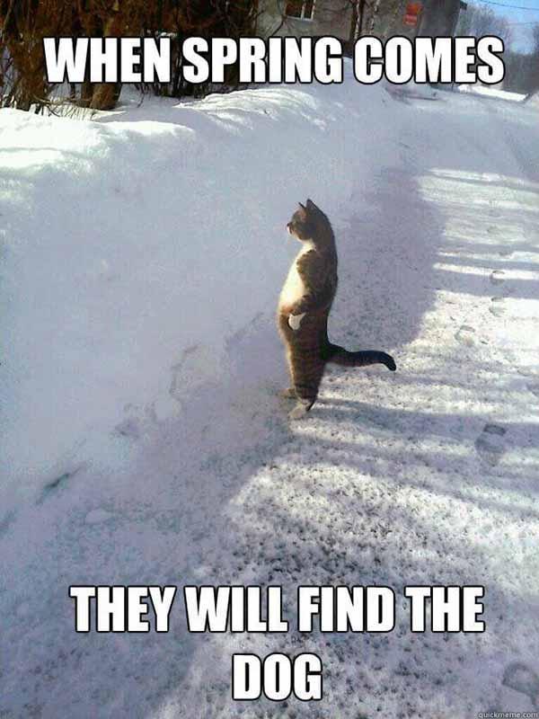 snow cat meme