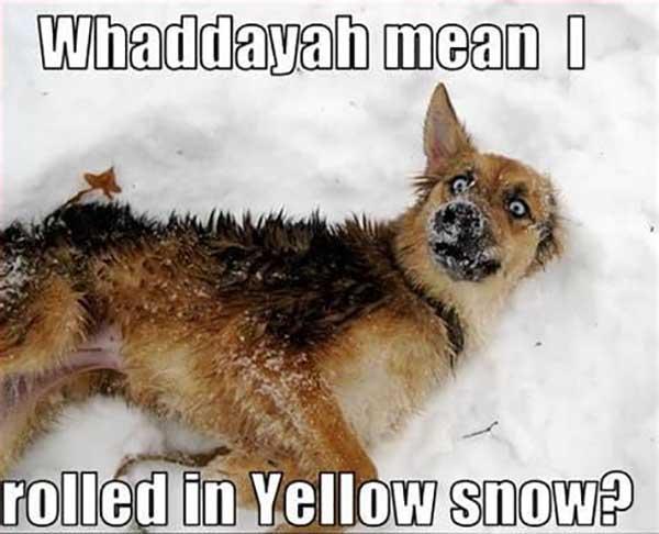 snow dog meme