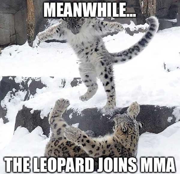snow leopard meme