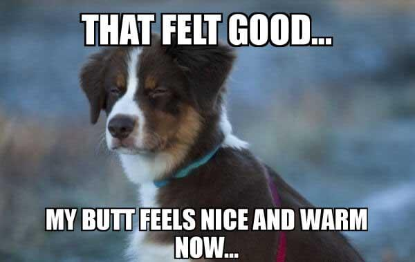 that felt good... dogg fart meme...