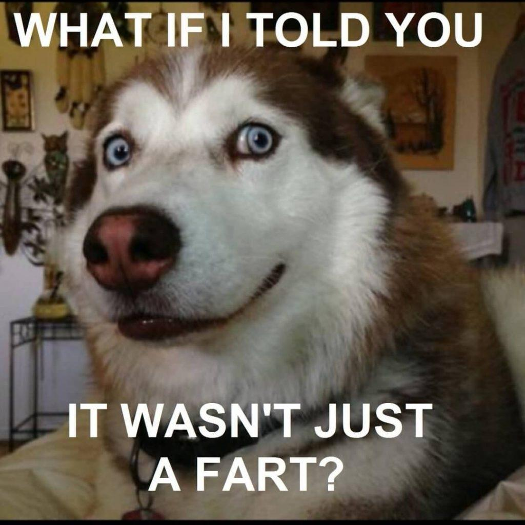 what if i told you it wasnt just a fart... dog fart meme