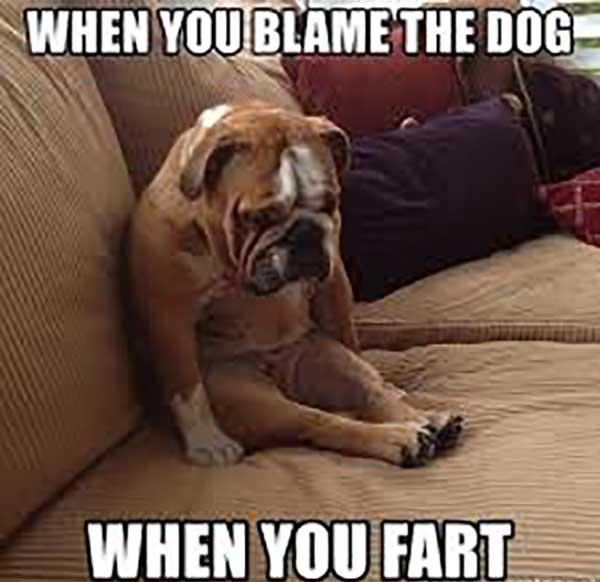 when you blame the dog when you fart