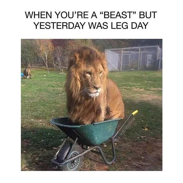 when you're a beast but yesterday was leg day