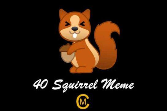 40 Squirrel Meme
