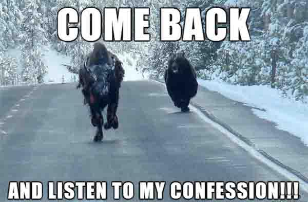 Bison-Has-Had-Enough-Of-Confession-Bear-Memes-Talking