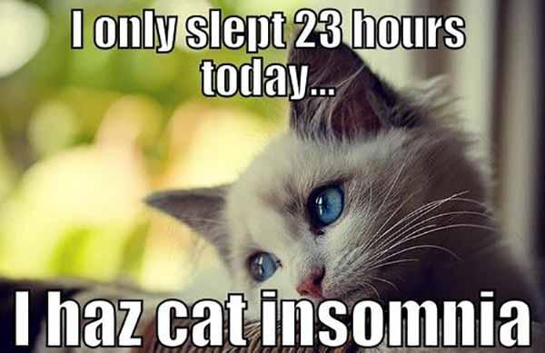 Cat Insomnia