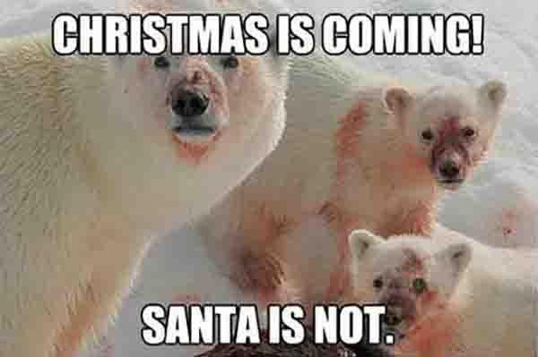 Christmas-is-coming-funny-polar-bear-meme