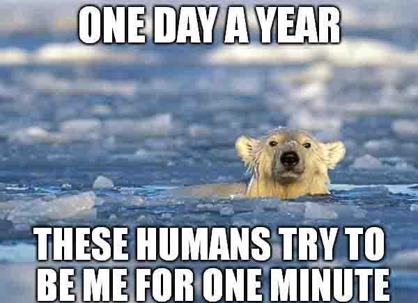 Polar Bear Swim