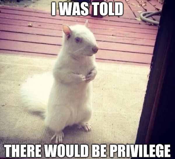 albino squirrel meme