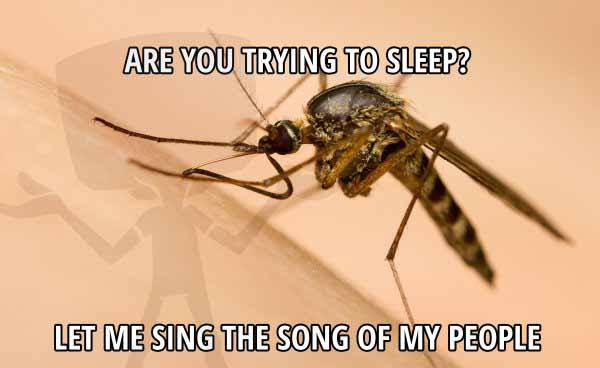 are you trying to sleep -insomnia funny meme