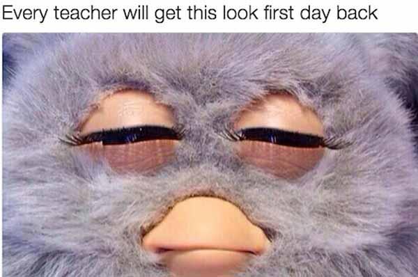 back to school monkey meme