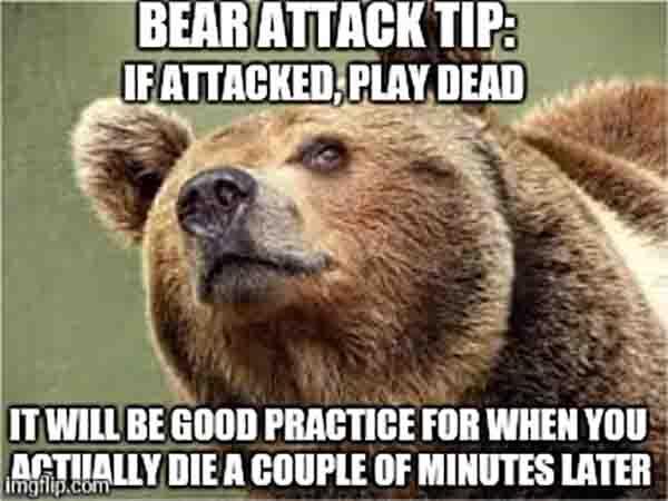 bear attack meme