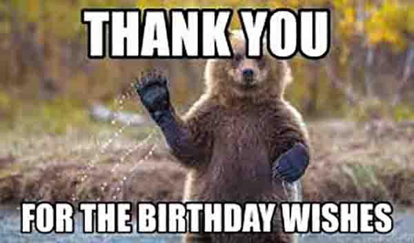 bear birthday meme