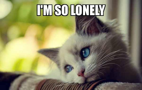 cat i'm so lonely meme