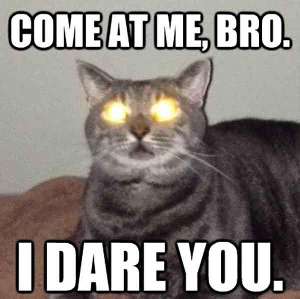 cat laser eyes meme