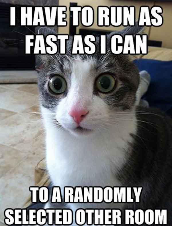 cat running upstairs meme