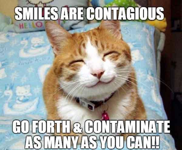 cat smile meme