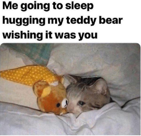 cat teddy bear