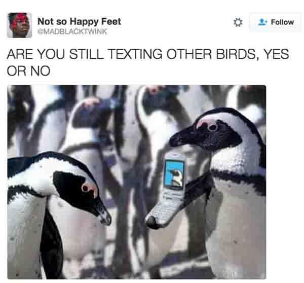 cheating penguin meme