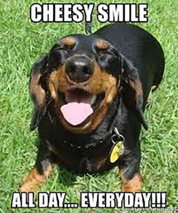 cheesy smile meme
